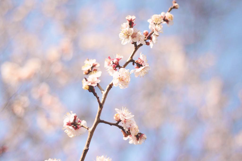 f:id:spring33:20190216203605j:plain