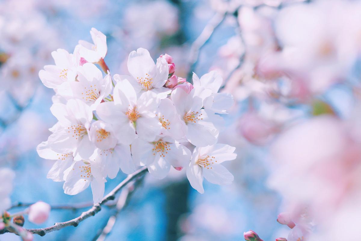 f:id:spring33:20190401233703j:plain