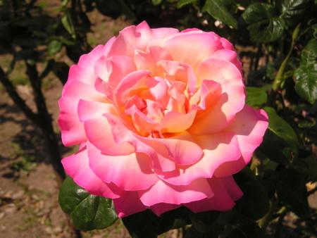 f:id:springflower:20160611112439j:image