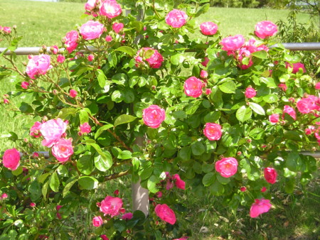 f:id:springflower:20160611112443j:image