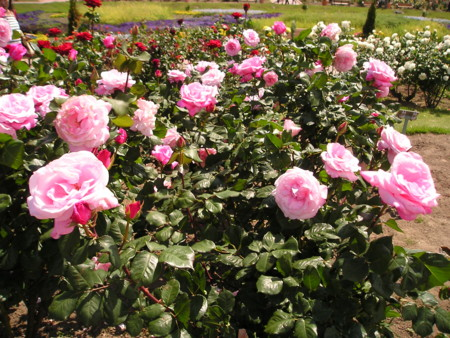 f:id:springflower:20160611112452j:image