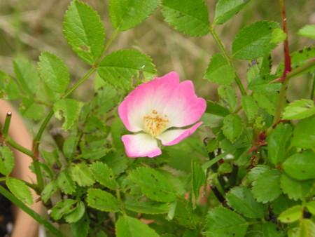 f:id:springflower:20160611112728j:image