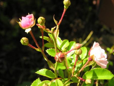 f:id:springflower:20160611112741j:image