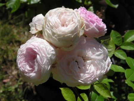 f:id:springflower:20160611140032j:image