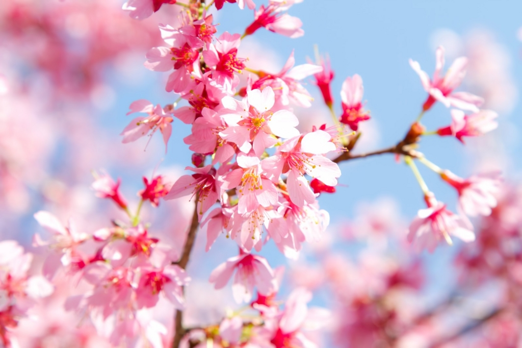 f:id:springmaron52:20160817113018j:plain