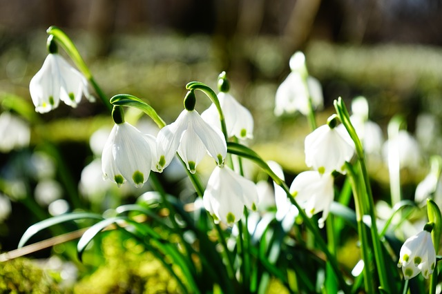 f:id:springmaron52:20170315173923j:plain