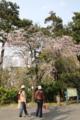 [きまぐれ×フォト]春先の小田原城散策─その3(2010年4月18日、小田原城址公園にて)