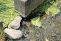 [きまぐれ×フォト]田んぼの用水路(2010年7月23日、富水駅付近にて)
