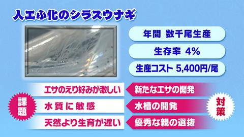 画像:鰻の人工孵化が抱える問題点