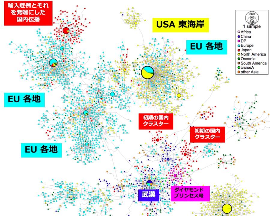 画像:新型コロナウイルスの伝播図