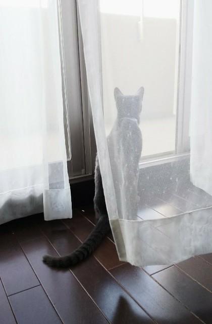 f:id:squarecat:20201211184449j:image