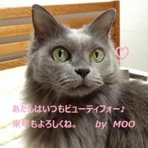 f:id:ss_sayoko:20161230182509j:image:left