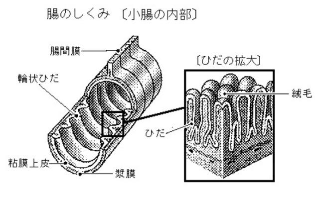 f:id:ssachiko:20150521085713j:image