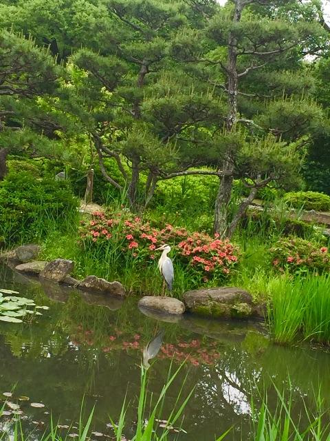 f:id:ssachiko:20150525135330j:image