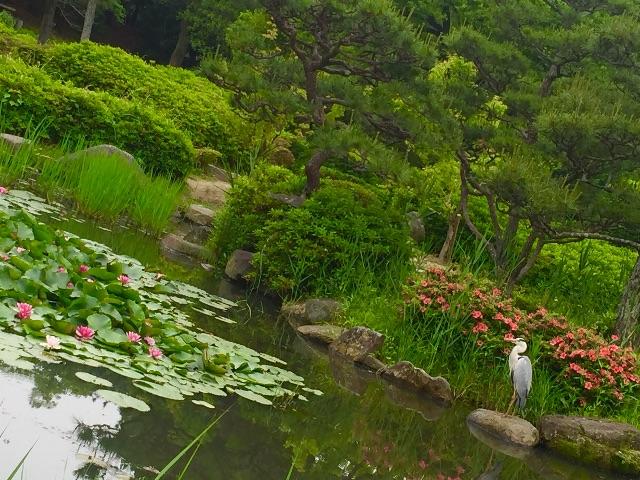 f:id:ssachiko:20150525135457j:image