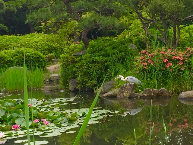 f:id:ssachiko:20150525135711j:image