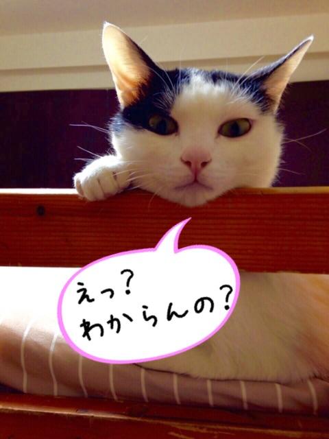 f:id:ssachiko:20150610195813j:image
