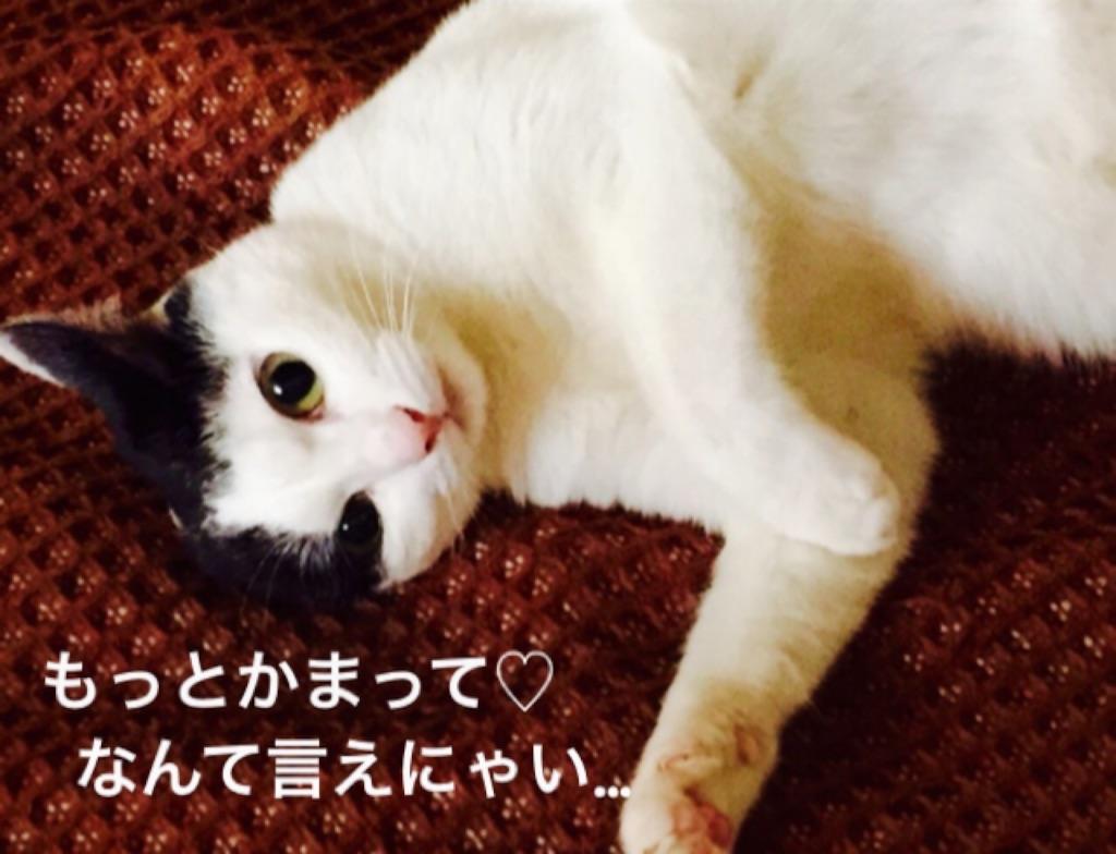 f:id:ssachiko:20160123165200j:image