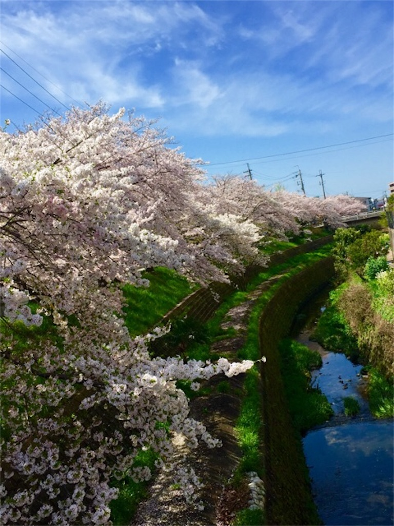 f:id:ssachiko:20160310135412j:image