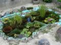 a自作の池
