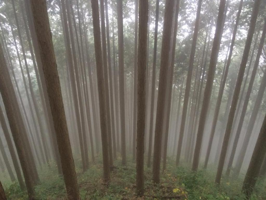 暑いので以前登った御岳山(東京)の涼しげな風景