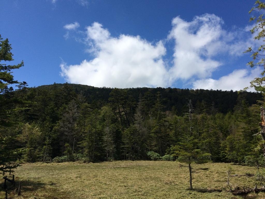 森を見渡す(八ヶ岳・白駒湿原)