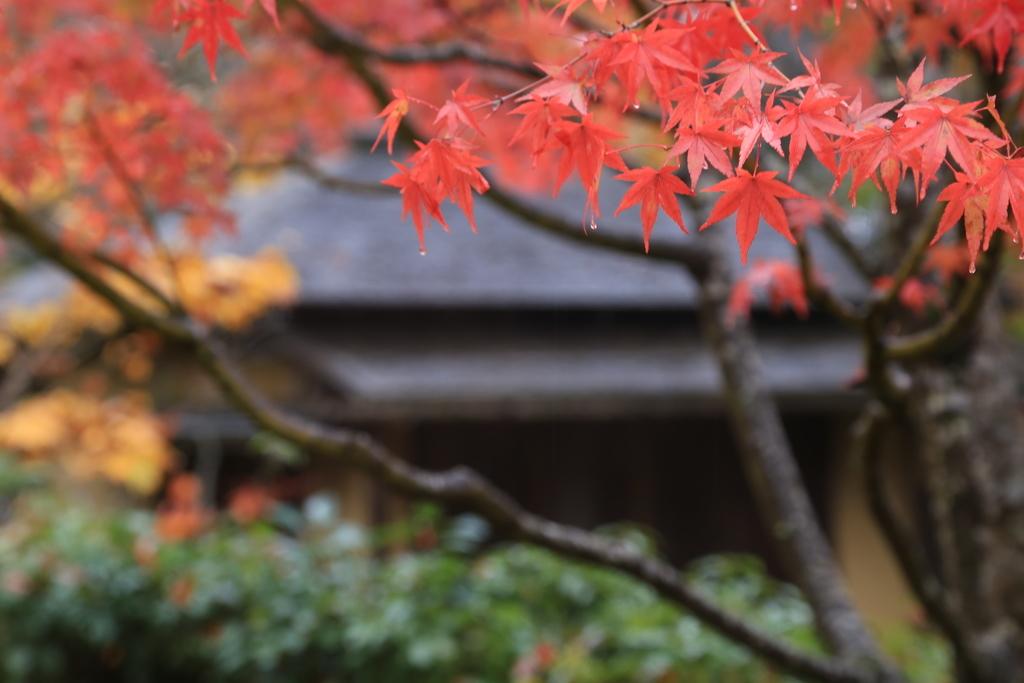 仙台で愛でた紅葉(撮影:診断サービスのプリセールス担当野平)