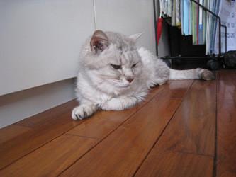 f:id:staffroom:20100604120046j:image
