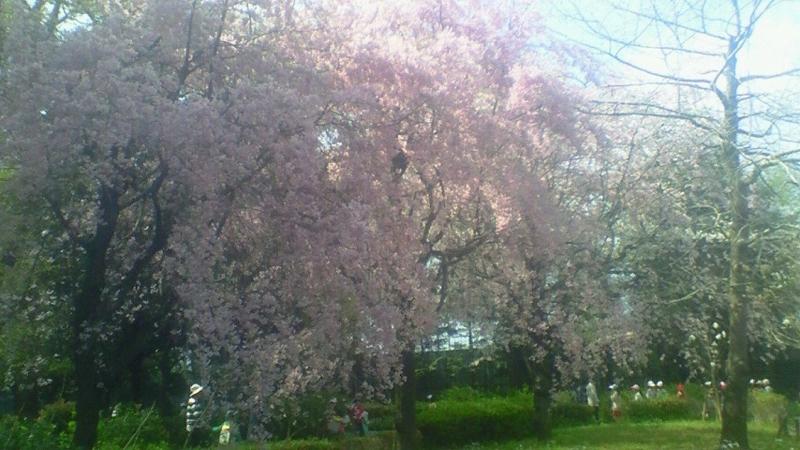 f:id:stantsiya_iriya:20170413223556j:image