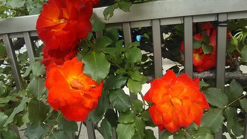 f:id:stantsiya_iriya:20210506184253j:plain