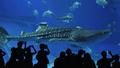 ジンベイザメのメス