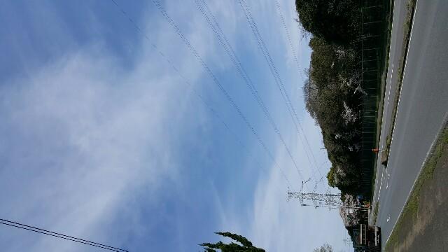 f:id:stop-nekohiroshi:20170412102205j:image