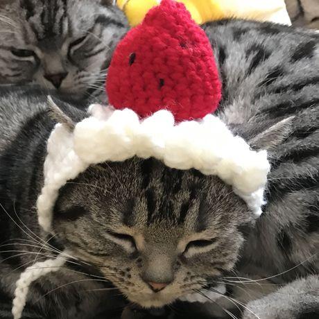 トレンドキーワードランキング番外編(2016年12月12日〜2016年12月18日)猫用帽子