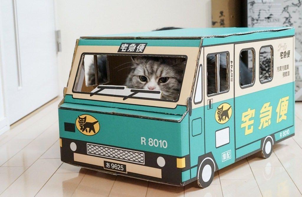 ネコが宅急便ダンボールに入っている画像