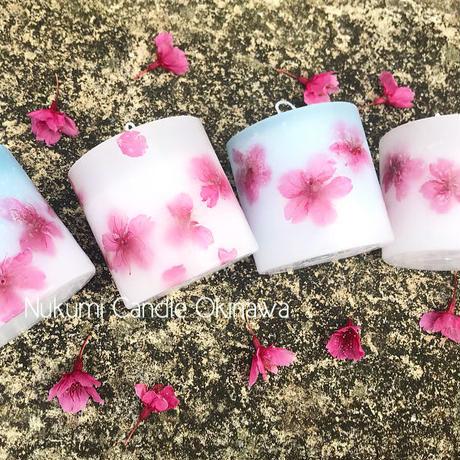 2018 寒緋桜 白色ベース