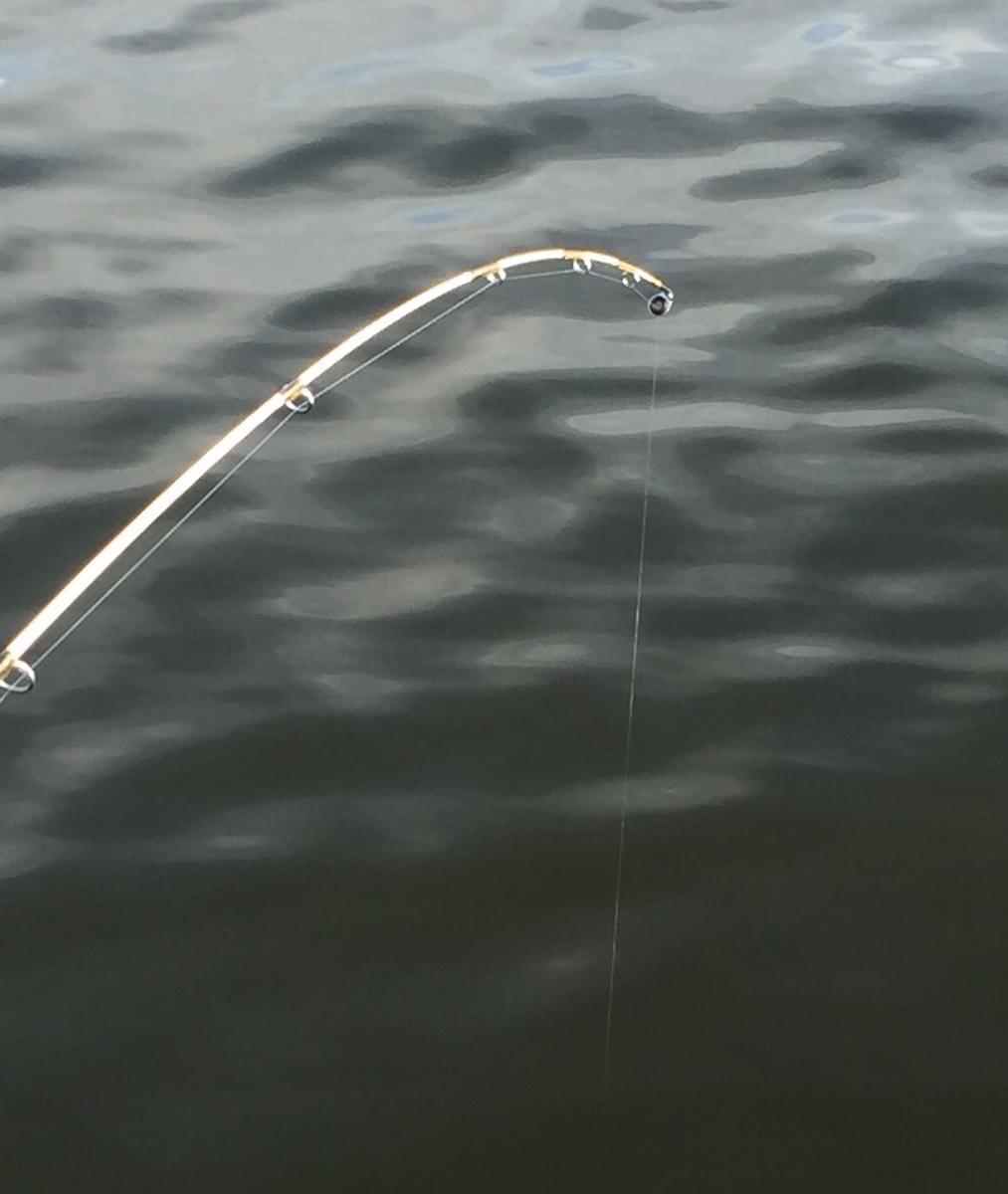 f:id:stormfish:20191109142514j:plain