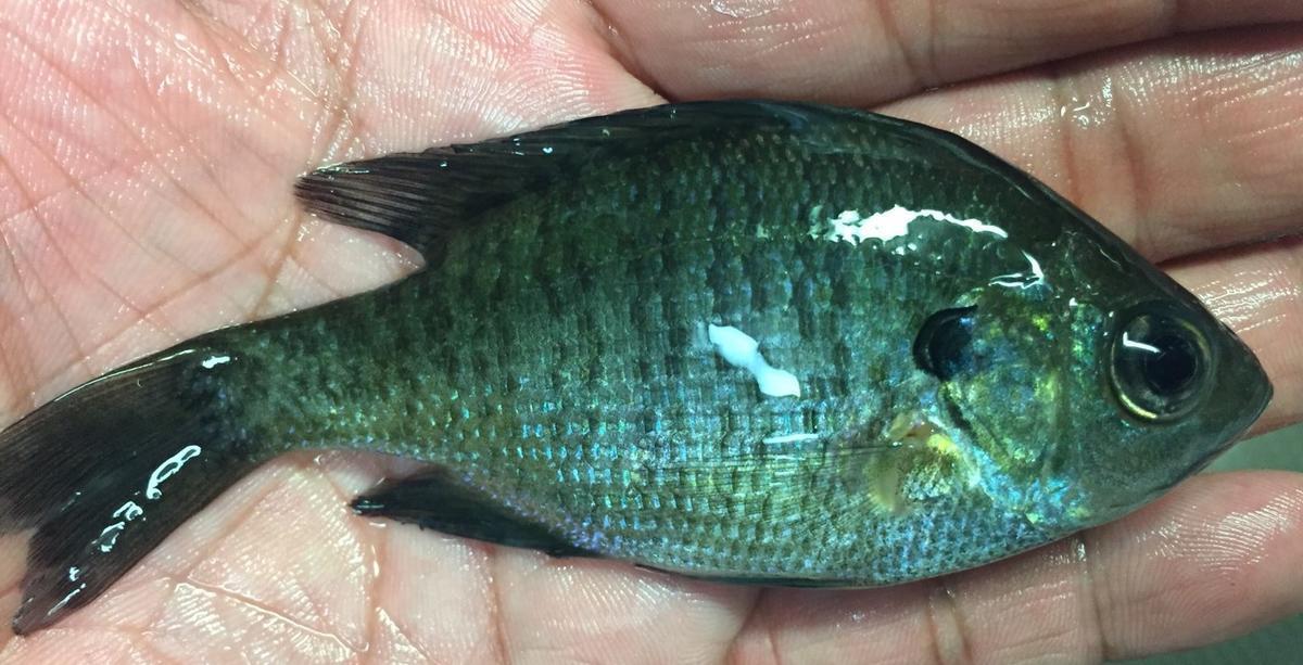 f:id:stormfish:20191109142808j:plain