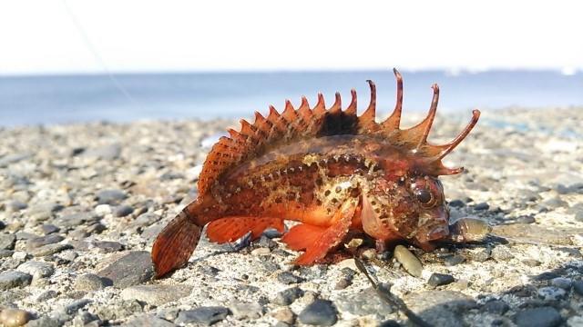f:id:stormfish:20191115022115j:plain