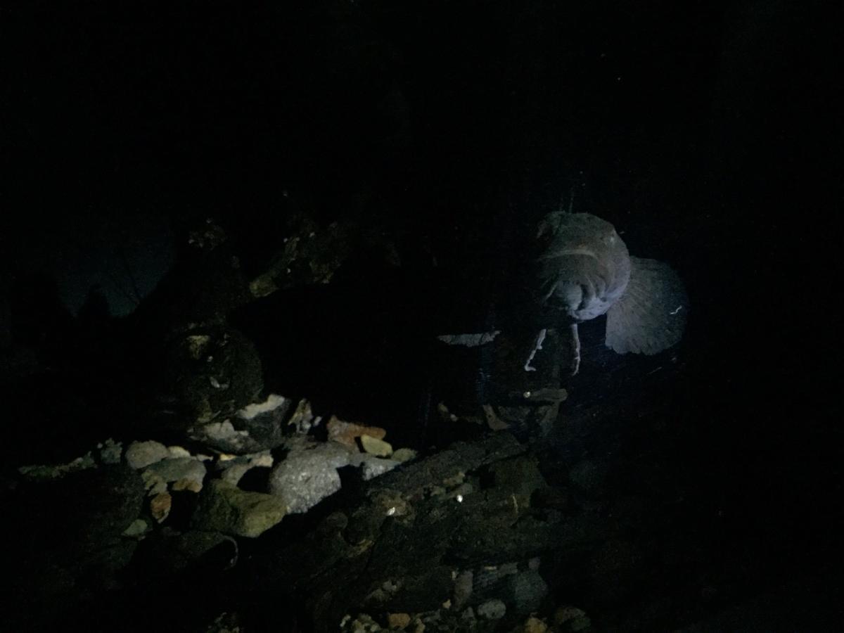 f:id:stormfish:20191222212452j:plain