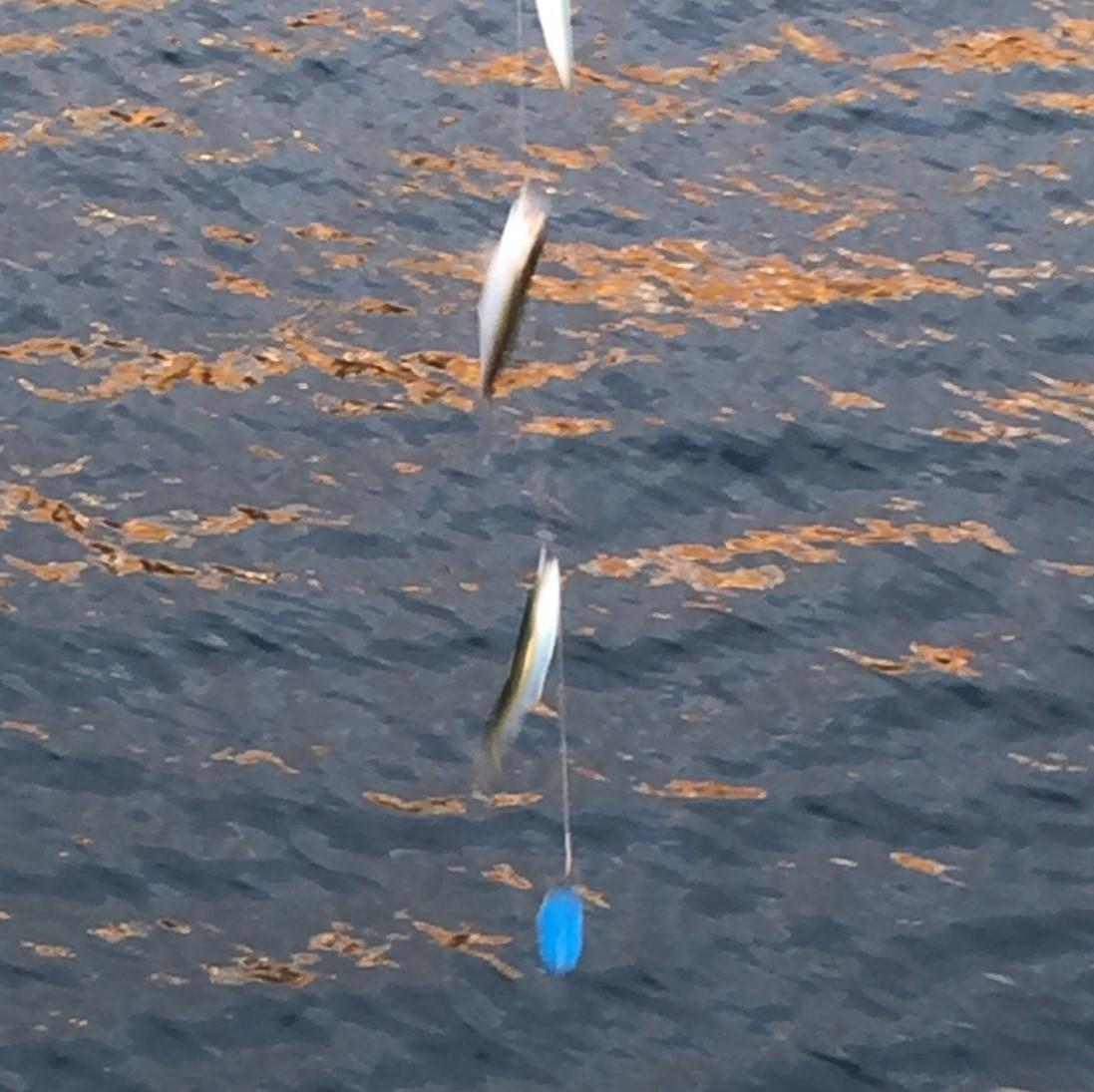 f:id:stormfish:20200206000543j:plain