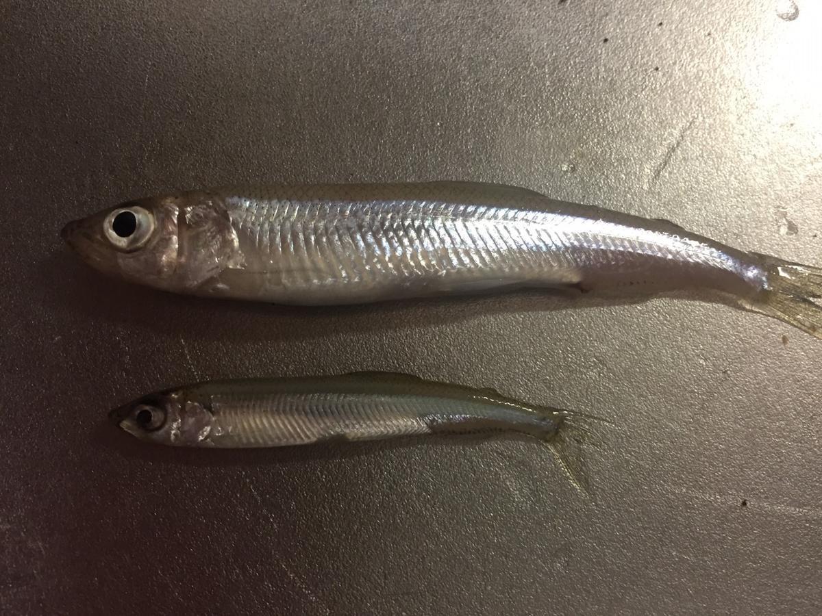 f:id:stormfish:20200223231648j:plain