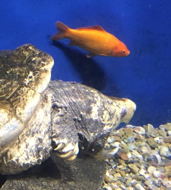 f:id:stormfish:20200302231949j:plain