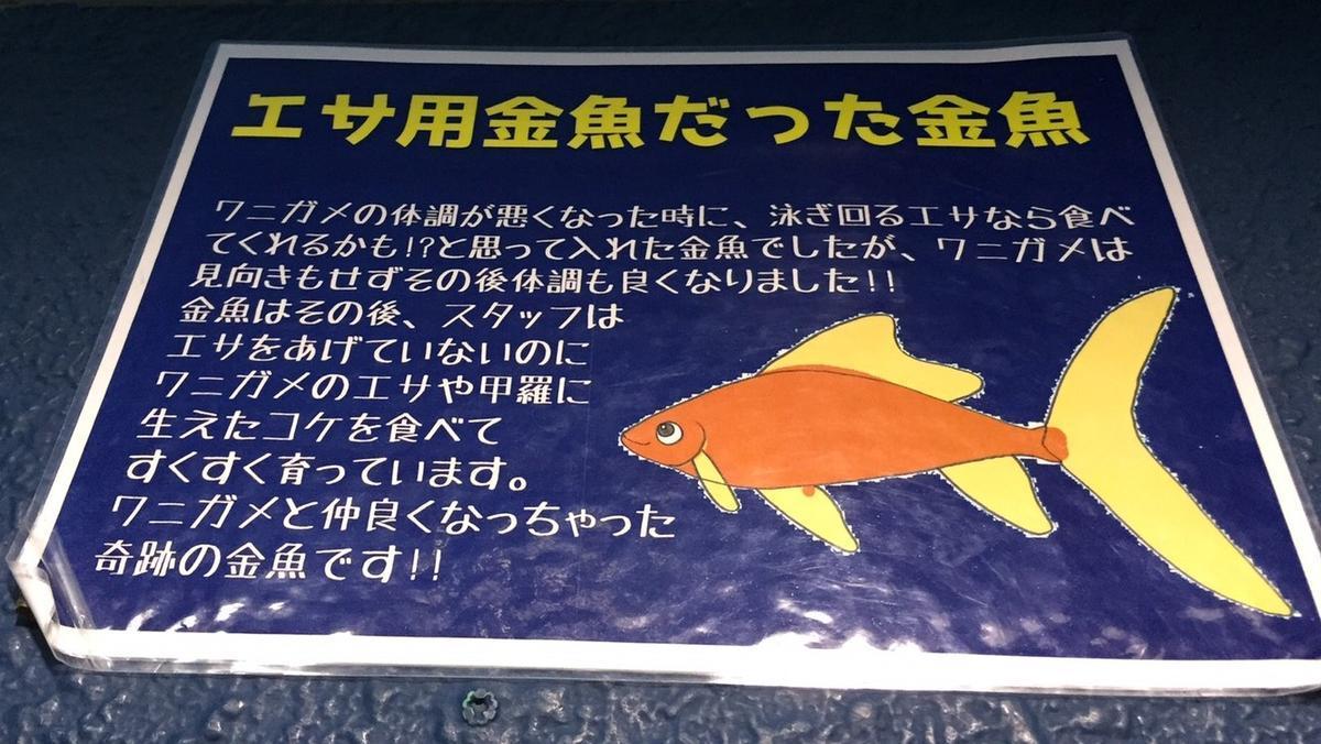 f:id:stormfish:20200302231950j:plain