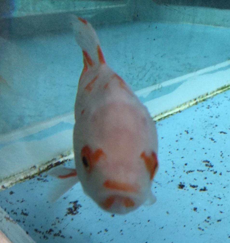 f:id:stormfish:20200302231951j:plain