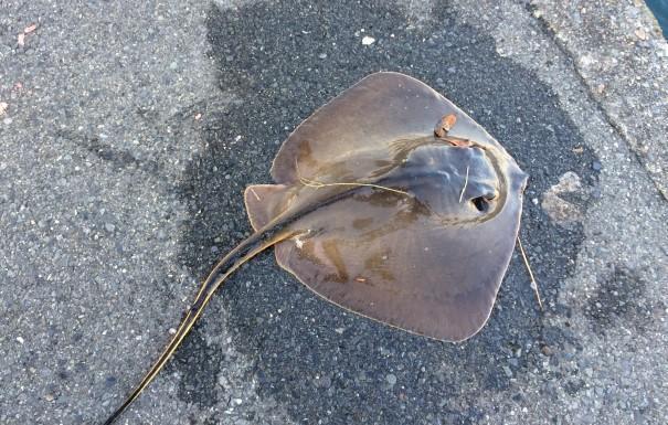 f:id:stormfish:20200411021416j:plain