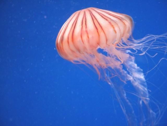 f:id:stormfish:20200411021551j:plain