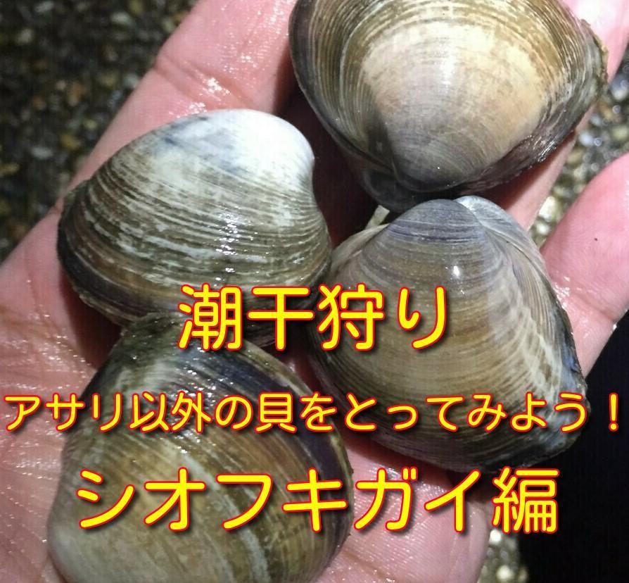 f:id:stormfish:20200504184559j:plain