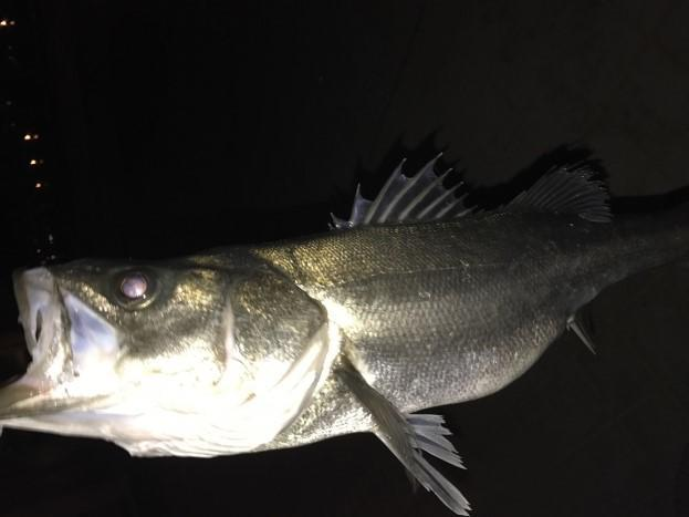 f:id:stormfish:20200620004441j:plain