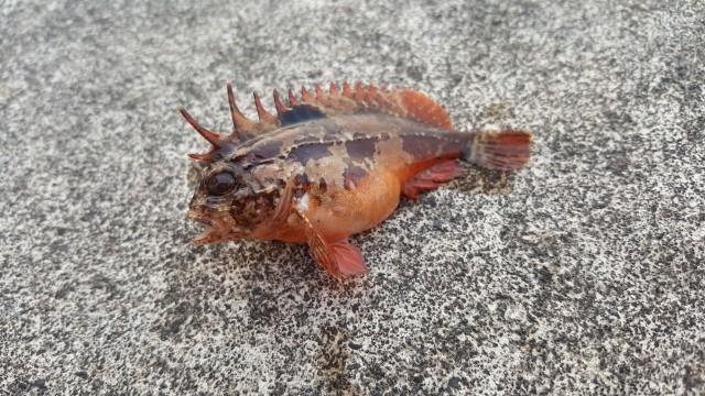 f:id:stormfish:20200620030054j:plain