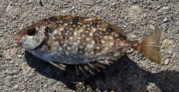 f:id:stormfish:20200620030241j:plain